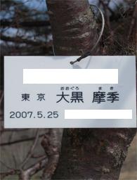 あいすブログ1277