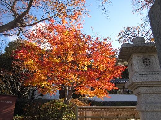 2013-11-12お寺のもみじ