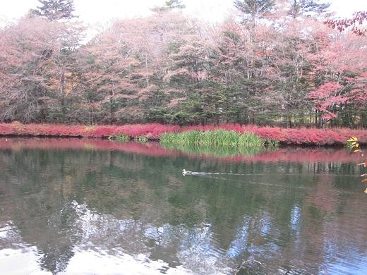 2013-11-13雲場池