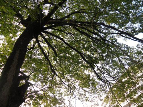 川沿いの木2