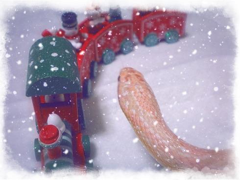 2013 哀愁のMerry Christmas