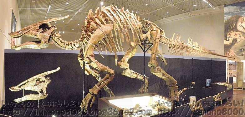 結構大きいサウロロフス「発掘! モンゴル恐竜化石展」