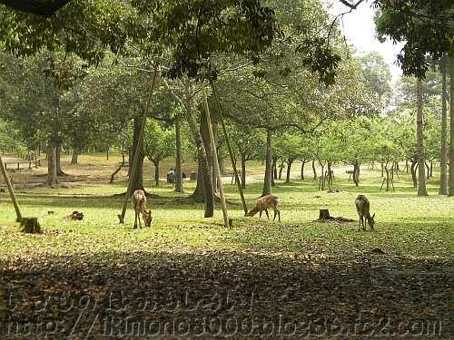 鹿がいっぱい奈良公園