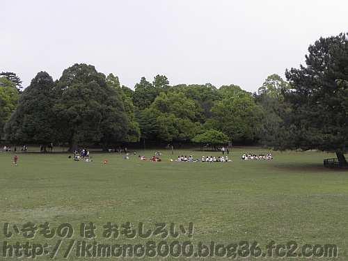 小学生がお弁当を食べる奈良公園