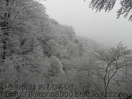 12月の金剛山山頂北側斜面のブナ林