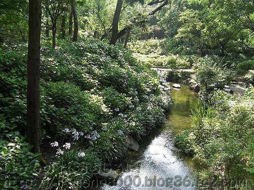 水辺のビオトープ状態のシーズンオフの長居植物園のアジサイ園