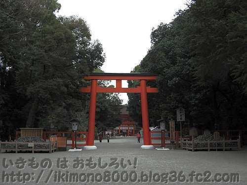 社殿のまわりは常緑樹の下鴨神社