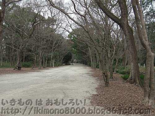 落葉樹が目立つ冬の糺の森の表参道