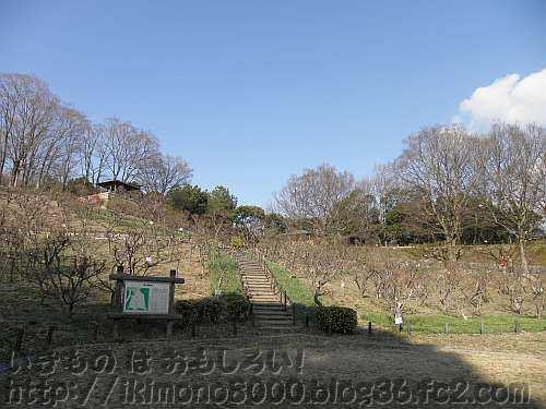 梅の花見にはまだまだの立春を過ぎた錦織公園の梅の里