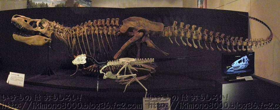 タルボコタルボ「発掘! モンゴル恐竜化石展」