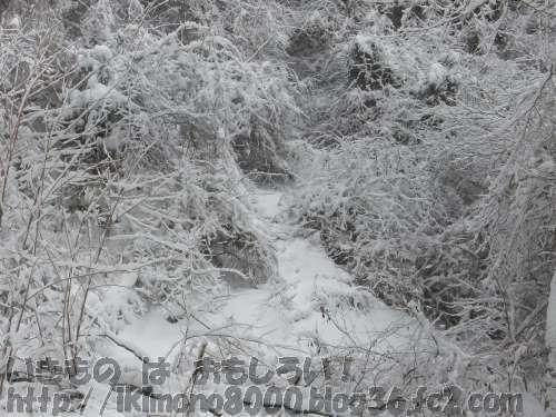 雪が積もって真っ白になったモミジ谷道