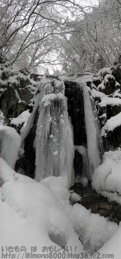 氷よりも雪が目立つモミジ谷大六堰堤の氷瀑2013