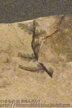 シダ植物の葉の化石