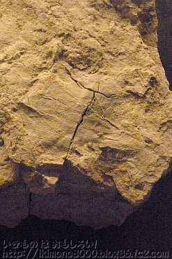 広葉樹の葉の化石