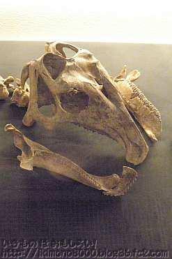 ハドロサウルスの仲間の化石