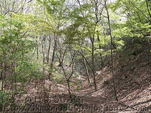 大阪市立大学理学部附属植物園の暖帯型落葉樹林