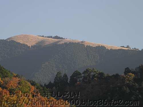 滝畑ダムから見上げた黄金色の冬の岩湧山の茅場
