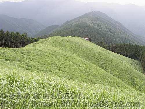緑色の初夏の岩湧山山頂西尾根