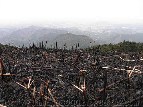 燃えた後の岩湧山山頂付近