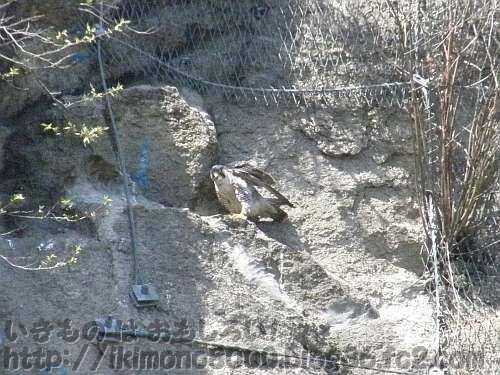 クライミングウォールの横の壁に止まっている鳥