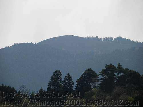 山焼で真っ黒になった春の岩湧山(滝畑ダムより)