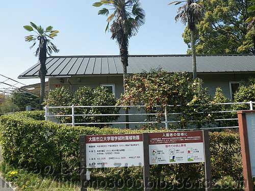 大阪市立大学理学部附属植物園の事務所棟