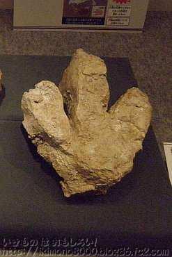 タルボサウルスのものと思われる足跡凸型化石