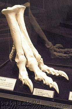 タルボサウルスの足の化石