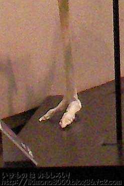 「ホネホネたんけん隊」で展示されていたダチョウの足の骨