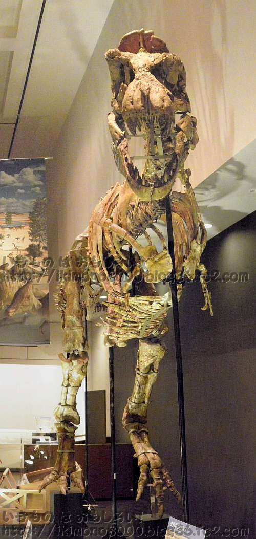 スプリンターだったかもしれないタルボサウルス
