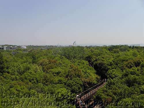 森に覆われた自然文化園