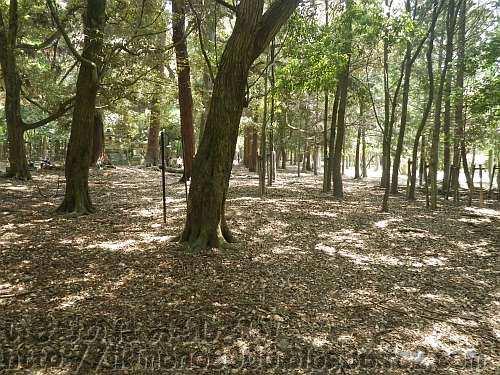 奈良公園の鹿苑の近くの林