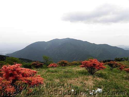 下赤阪の棚田が入水の頃の金剛山(大和葛城山から)