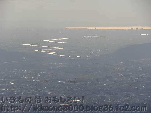 比叡山山上から見た都市の中のビオトープの淀川
