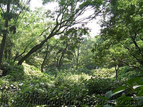 都市の中の大きなビオトープの長居植物園