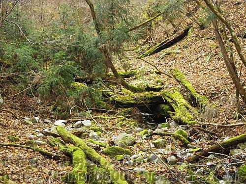 水の流れはほとんど見えない金剛山山頂直下の水越川源流部