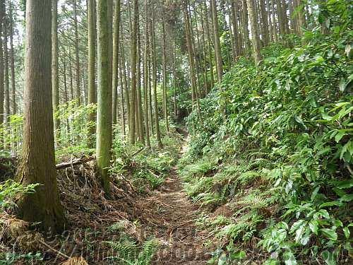 杉林の中に続いている二河原辺・水分道