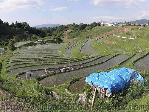 田植えが終わった6月の下赤阪の棚田