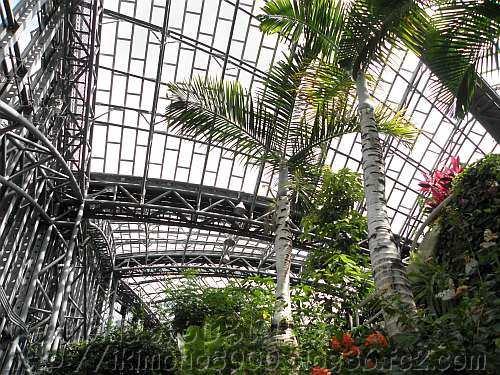 橿原市昆虫館の放蝶温室