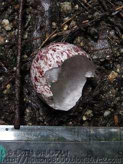 妙見谷に落ちていた謎の卵