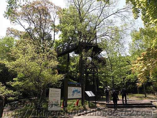 ソラードの入り口木登りタワー