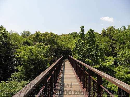 林冠へ消えていくソラードの空中観察路