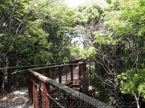 林冠に手が届くソラードの空中観察路