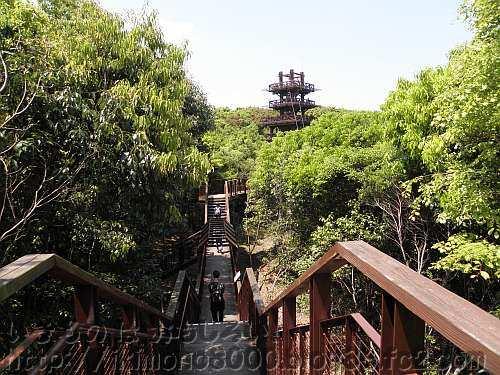 遠くに見えてきた展望タワー