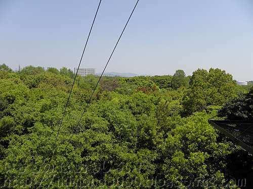 展望タワーの下層から見た万博公園の林冠