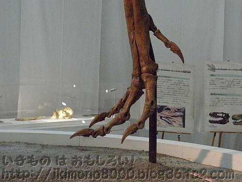 ティラノサウルス亜成体「ジェーン」の足(よみがえる地球の覇者!世界大恐竜展)