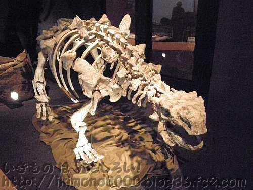 浙江省で見つかったヨロイリュウ類のチェジアンゴサウルスの復元骨格