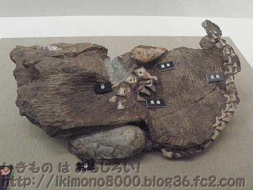 何が何だか分からないオビラプトルの抱卵化石