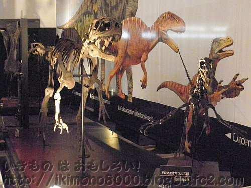 福井で見つかったフクイラプトルとドロマエオサウルス類