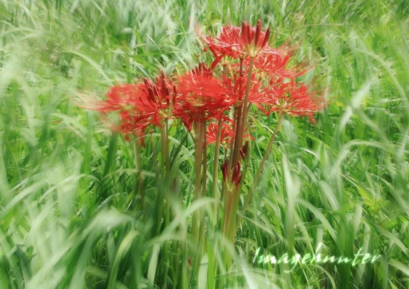 草の風 (800x566)